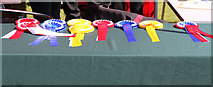 NS2209 : Rosettes at Dog Jamboree, Culzean Country Park 2019 by Billy McCrorie