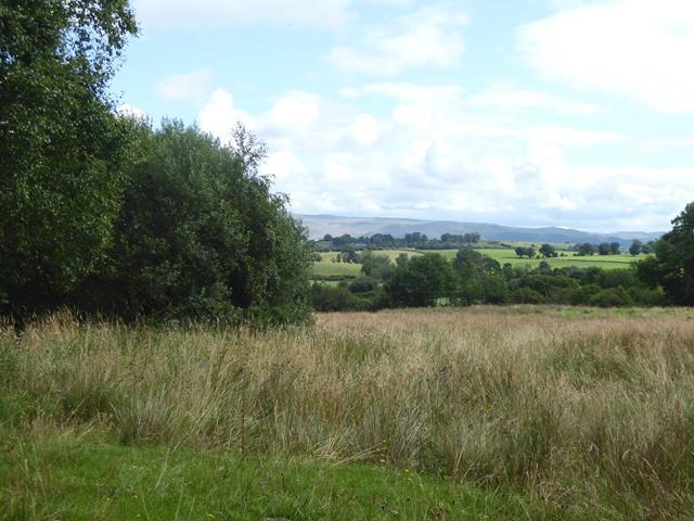 Rushy field at Long Moor