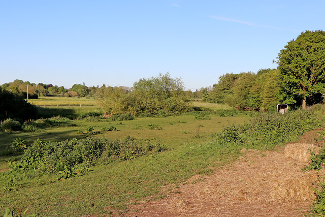 Rough pasture by the River Trent near Little Haywood