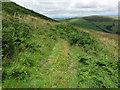 NT8729 : Public Footpath between Haddon & Longknowe Hills by Geoff Holland