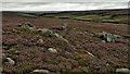 NZ6005 : Ingleby Moor by Mick Garratt
