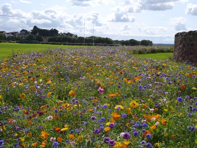 Beautiful Flower Beds at Winterfield Park Dunbar