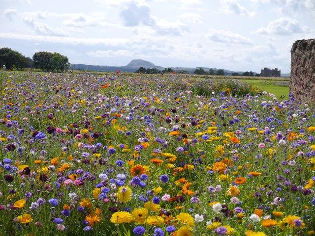 Pretty Flower Beds at Winterfield Park Dunbar