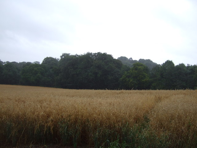 Crop field and woodland