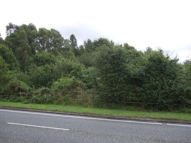 Woodland beside Donnington Wood Way