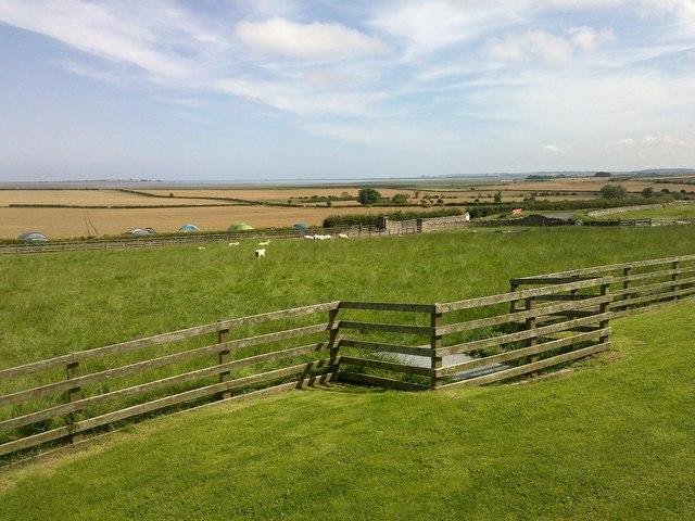 Field of Sheep at the Barn at Beal