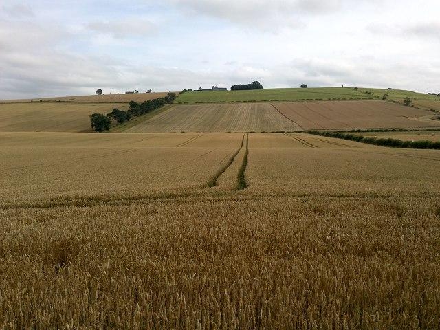View of Branxton Hill from the Flodden Memorial