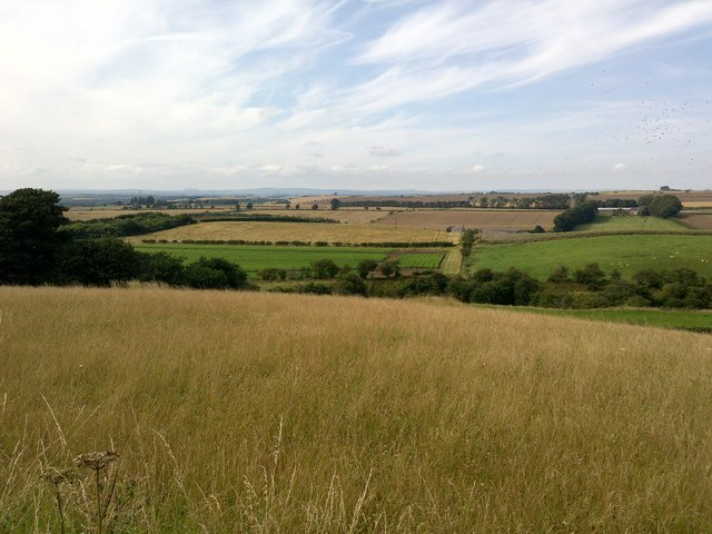 Fields in Branxton
