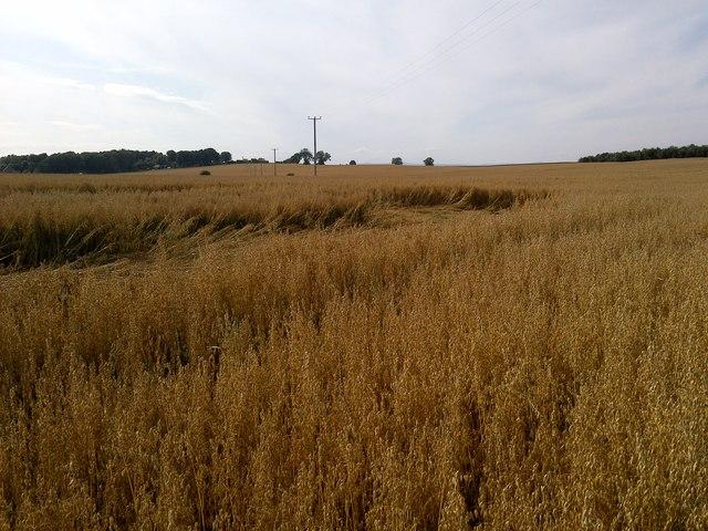 Field near Duddo Stone Circle