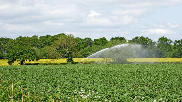Potato watering near Fradley Junction, Staffordshire