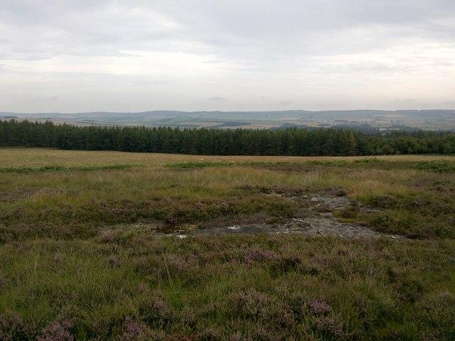 Weetwood Moor