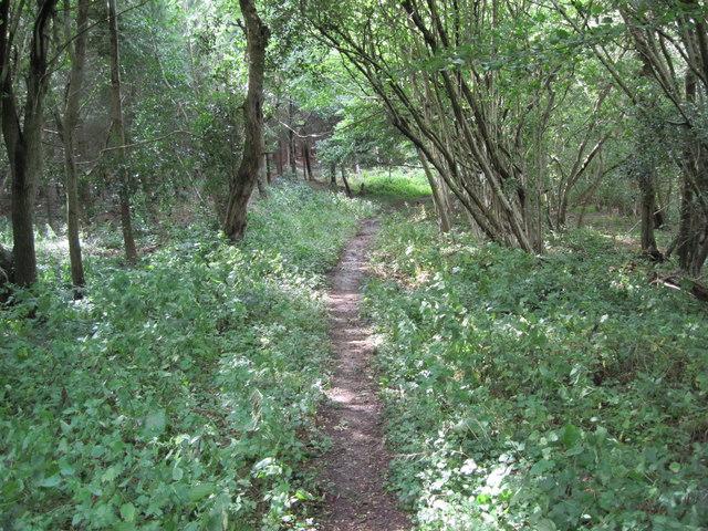 Path in Heathend Copse by Chris Wimbush