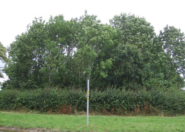 Woodland beside Wellington Road (A518)