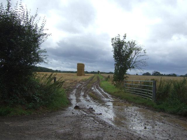 Muddy field entrance off Lilyhurst Road
