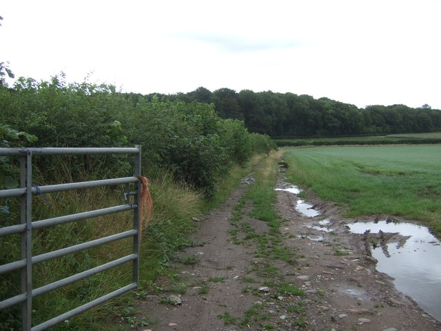 Farm track off Lilyhurst Road
