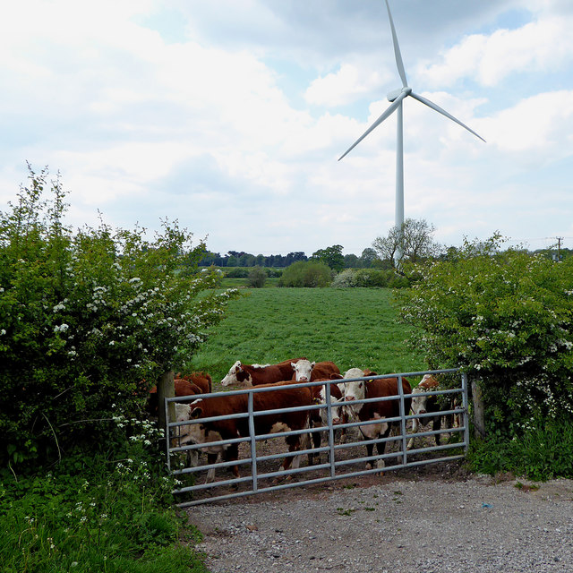 Cattle field and turbine near Gailey in Staffordshire