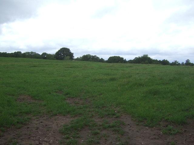 Grazing near Blymhill Marsh