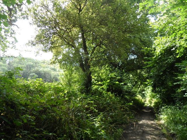 Mead Lane ,Buriton