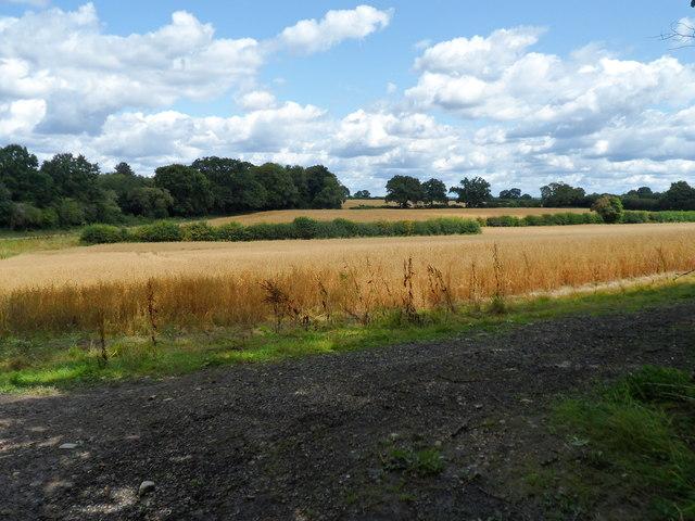 Farmland East of Buriton
