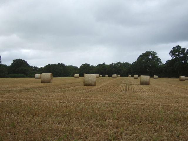 Bales in stubble field near Bickford