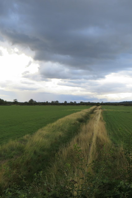 Drainage ditch in a field