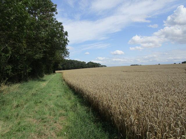 Field edge near Racer Farm