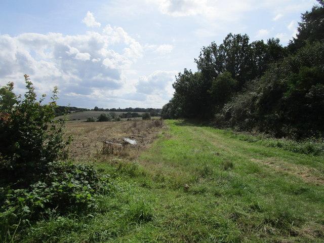 Farm track alongside Elder Wood