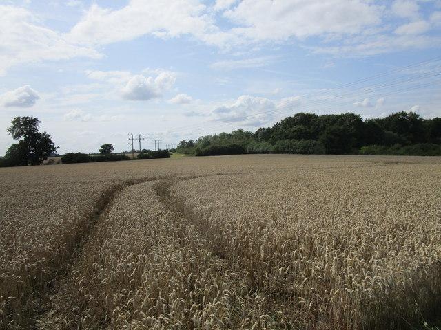 Wheat field and Dobbin's Wood