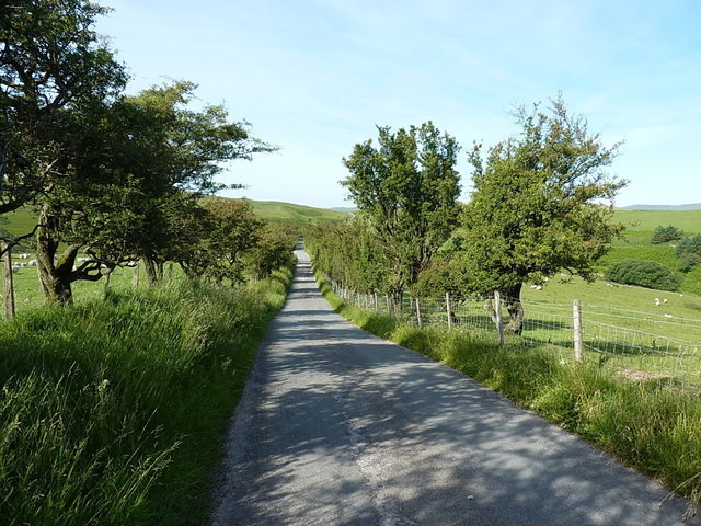 Hawthorn-lined hill road