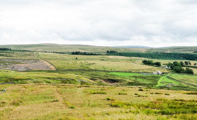 Moorland slope descending towards Ayle Burn