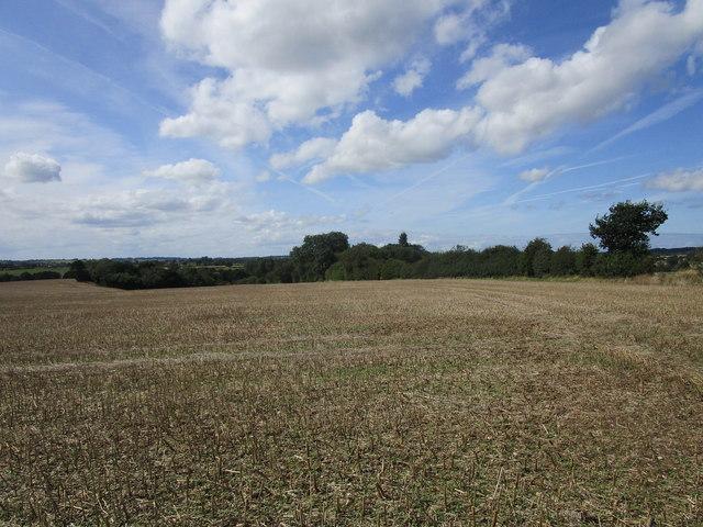 Harvested field of oilseed rape