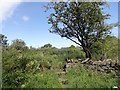 NZ1345 : Stone stile at Black Plantation by Robert Graham