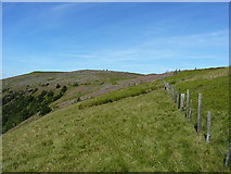 SJ1132 : Along the ridge on the east side of Mynydd Tarw by Richard Law