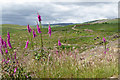 SN8854 : Clearfell north-east of Abergwesyn in Powys by Roger  Kidd