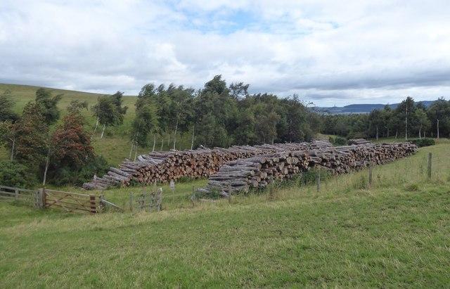 Timber pile awaits the lorries