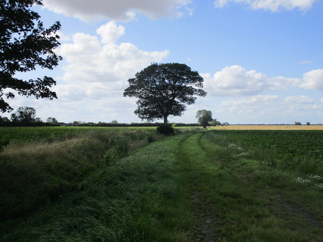 Footpath in Gibbet Fen