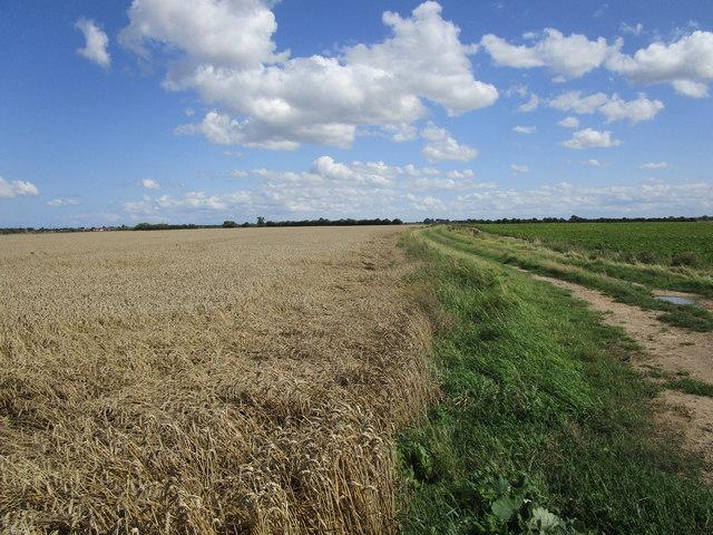 Farm track at Shoff Hills