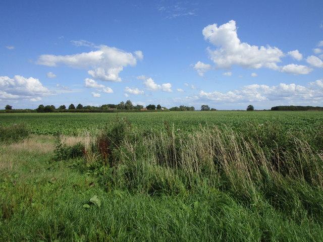 Mallard Hurn near Dovecote Farm