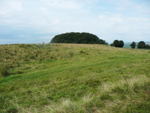 Triangulation pillar and Hunters Hill Plantation. Wigglesworth