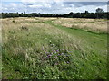 TQ4677 : End of summer on East Wickham Open Space by Marathon