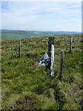 SJ1033 : White stone at a fence junction by Richard Law