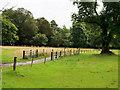 V9590 : Killarney National Park by David Dixon