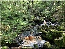 SK2579 : Burbage Brook by Andrew Abbott