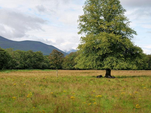 Tree in Killarney National Park