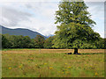 V9590 : Tree in Killarney National Park by David Dixon