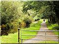 V9590 : Riverside Walk, Killarney National Park by David Dixon