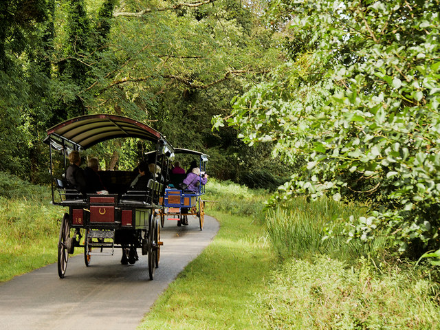 Jaunting Cars on the Ross Castle Ringway, Killarney National Park