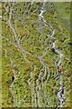 SY8080 : Footpath erosion on Swyre Head by David Martin