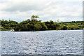 V9488 : Small Island in Lough Leane by David Dixon