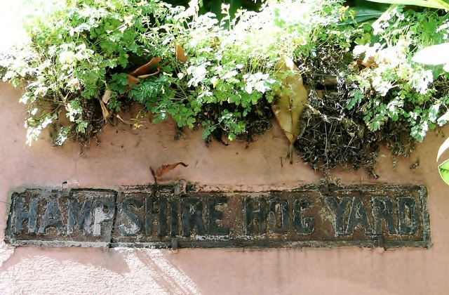 Hampshire Hog Yard (name sign)
